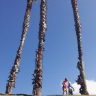 Two little boys playing by palm trees against blue sky — Stock Photo