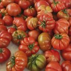 Fresh picked red Tomatoes in heap — Stock Photo