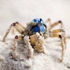 Gros plan du crabe de soldat ramper dans le sable — Photo de stock