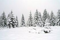 Мальовничий вид на снігу покриті ялинки — стокове фото