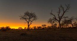 Vue panoramique sur le majestueux paysage africain au coucher du soleil — Photo de stock