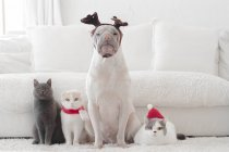 Shar pei dog and three cats dressed for Christmas — Stock Photo