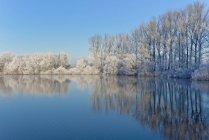Vue panoramique sur les arbres gelés reflétés dans un lac, Tergast, Basse-Saxe, Allemagne — Photo de stock