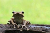 Rana orejuda sentada en el tronco, espacio para copiar - foto de stock