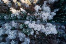 Vue aérienne de la route serpentant à travers les arbres enneigés, Salzbourg, Autriche — Photo de stock