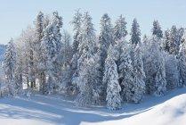 Scenic view of Snow covered fir trees, Hemberg, St Gallen, Switzerland — Stock Photo