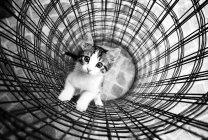 Монохромное изображение котенка, застрявшего в металлической сетке — стоковое фото