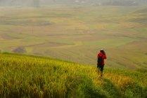 Rear view of traveler taking photo of beautiful green rice terrace during sunset, Vietnam — Stock Photo