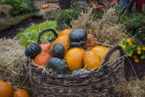 Basket with different pumpkins in garden — Stock Photo