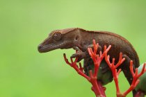 Gecko sentado en una planta, vista de cerca, enfoque selectivo - foto de stock