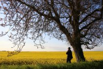 Man standing by a tree in a rapeseed field, Niort, France — Stock Photo