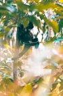Scimmia in un albero, Rio de Janeiro, Brasile — Foto stock
