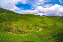 Живописный вид на Камероновское нагорье, Паханг, Малайзия — стоковое фото