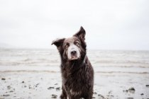 Портрет собаки на пляжі, вид крупним планом — стокове фото