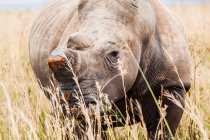 Majestic rhino standing at wild nature — Stock Photo