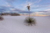 Malerischen Blick auf weißen Sand Nationaldenkmal, tularosa, New Mexico, Amerika, Vereinigte Staaten — Stockfoto