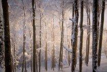 Lumière du soleil dans une forêt enneigée, Gaisberg, Salzbourg, Autriche — Photo de stock