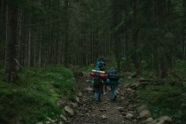 Пять человек идут по тропинке в лесу, Украина — стоковое фото