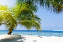 Scenic view of Palm tree on a tropical beach, Maldives — Stock Photo