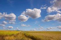 Vista panoramica sul paesaggio rurale, Mertloch, Mayen-Koblenz, Renania-Pfalz, Germania — Foto stock
