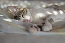 Gato que encontra-se em uma cama na luz solar, opinião do close up — Fotografia de Stock