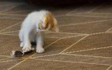 Kätzchen spielt mit einem selbstgemachten Spielzeug, Nahaufnahme — Stockfoto