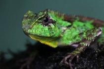 Retrato de un lagarto, vista de cerca, enfoque selectivo - foto de stock
