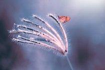 Mariposa en una flor contra fondo borroso - foto de stock