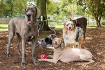 Group of different dogs standing in the park — Stock Photo