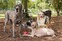 Gruppe verschiedener Hunde, die im Park stehen — Stockfoto