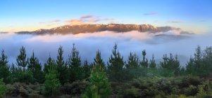 Живописный вид на величественный пейзаж деревьев и туман — стоковое фото