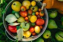 Свіжі органічні фрукти та овочі в саду — стокове фото