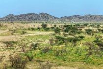 Vista panorámica del paisaje del desierto en la primavera, Arabia Saudita - foto de stock