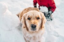 Boy and his golden retriever dog playing in the snow — Stock Photo