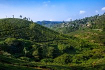Vue sur les jardins d'épices et la plantation de thé, Kumily, Thekkady, Kerala, Inde du Sud — Photo de stock