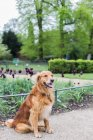 Portrait of a cute dog sitting in a park — Stock Photo