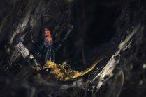 Araignée rouge dans un jardin, mise au point sélective — Photo de stock