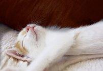 Крупный план котенка спящего на кровати — стоковое фото