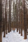 Boy walking through the woods in winter, United States — Stock Photo