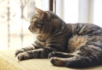 Кот лежит на стуле у окна, вид крупным планом — стоковое фото