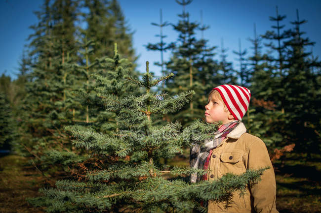 Boy Choosing Christmas tree — Stock Photo