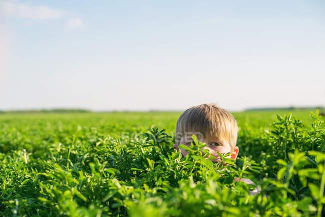 Boy hiding in field — Stock Photo