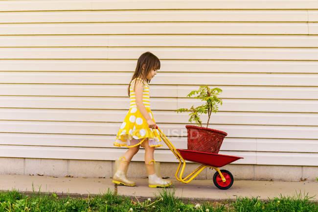 Girl pushing wheelbarrow with plant — Stock Photo