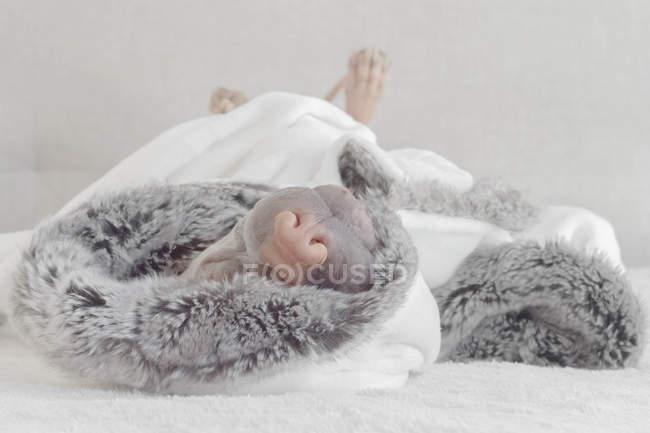 Chinese Shar-Pei dog sleeping — Stock Photo