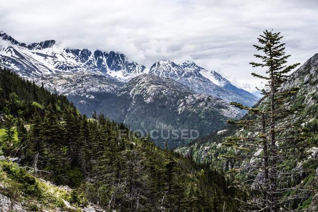 Nieve polvo montañas y árboles de hoja perenne - foto de stock