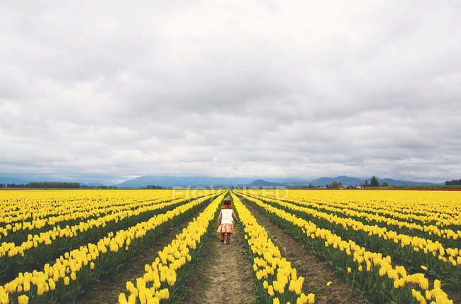 Девушка идет через тюльпановое поле — стоковое фото