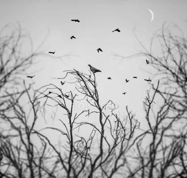 Birds flying above trees — Stock Photo