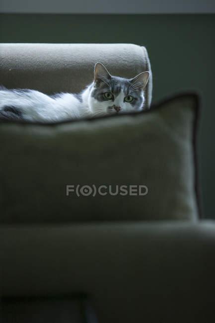 Katze auf Sofa liegend — Stockfoto