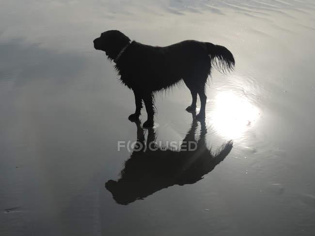 Dog standing on beach — Stock Photo