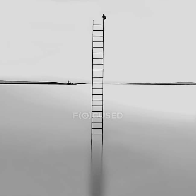 Scaletta in mare con il Gabbiano — Foto stock